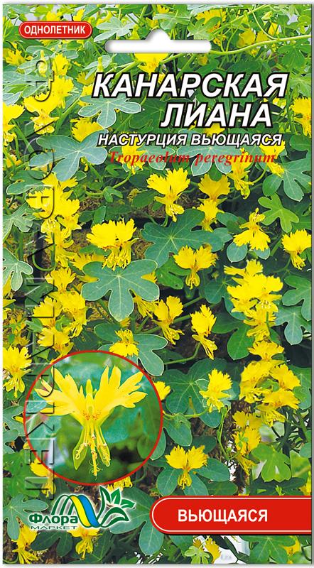Цветы настурция и описание